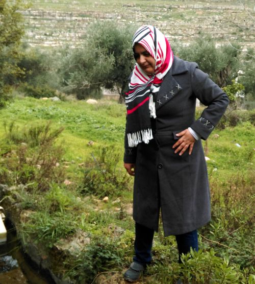 Hanadi Bader inspects a spring in Beitillu. These springs are largely unfit for drinking, and are currently used mostly for agriculture. If protected, they would provide a valuable source of drinking water for the community.