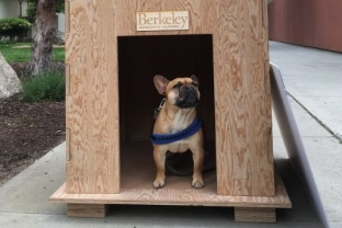 MidPac Sustainable Solutions Challenge:  Dog House